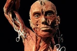 Exposição Body Worlds: Pulse em Nova York